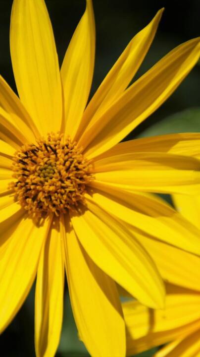 Hidden champions of botany